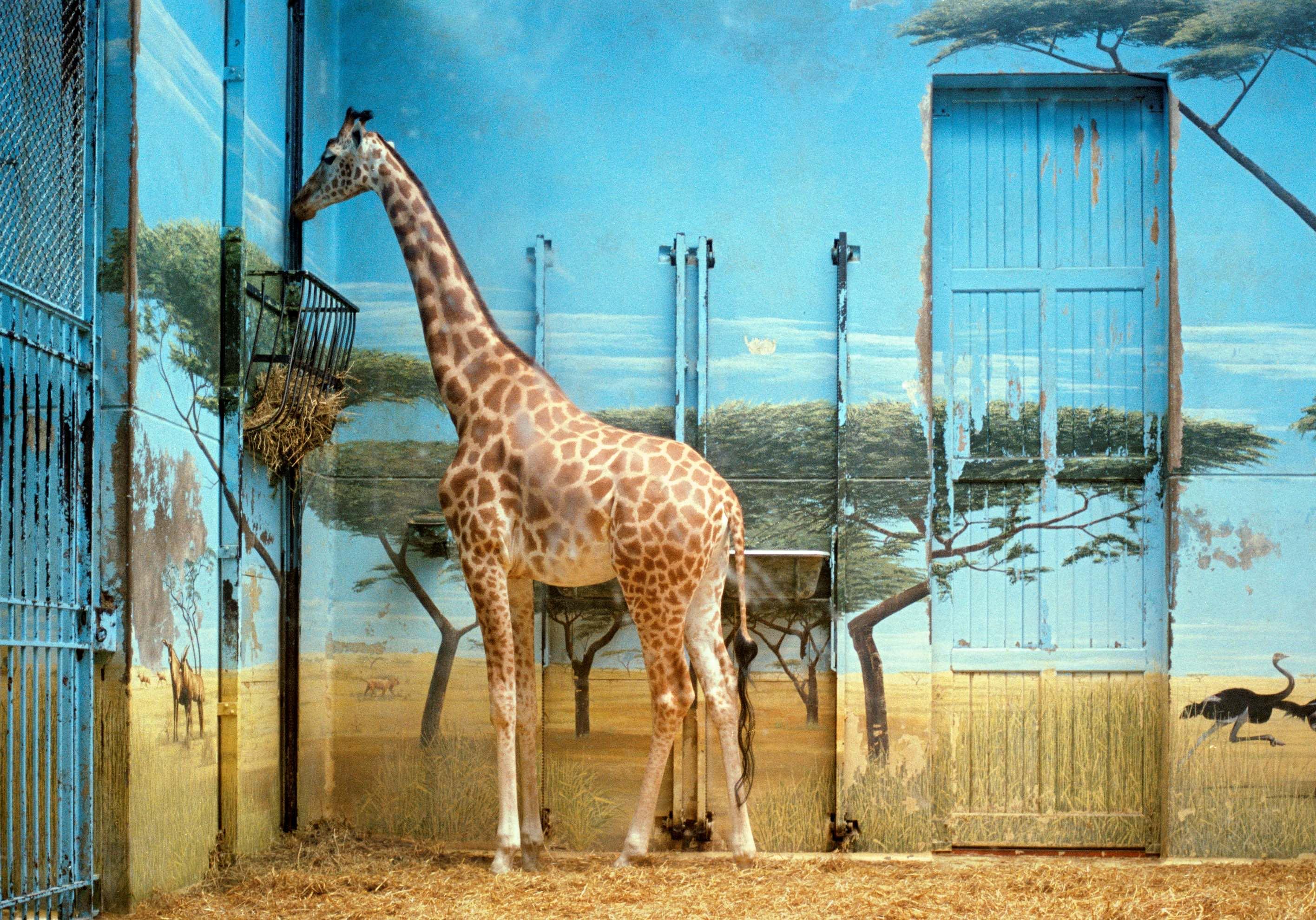 Candida Hofer, Zoologischer Garten Paris II 1997 copy