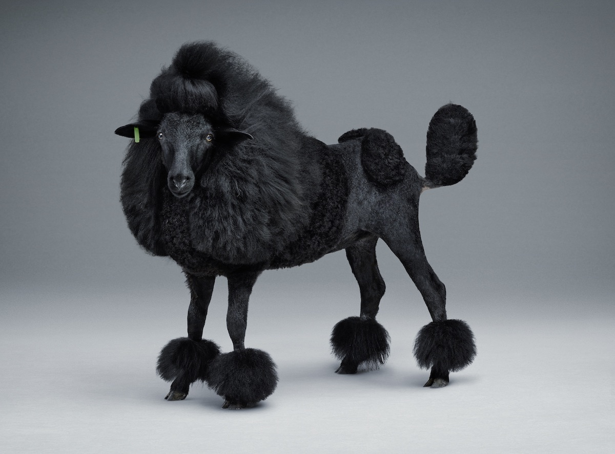 Lernert & Sander Blacker Sheep 2012 Dutch artists filmmaker commercial advertising brands COS
