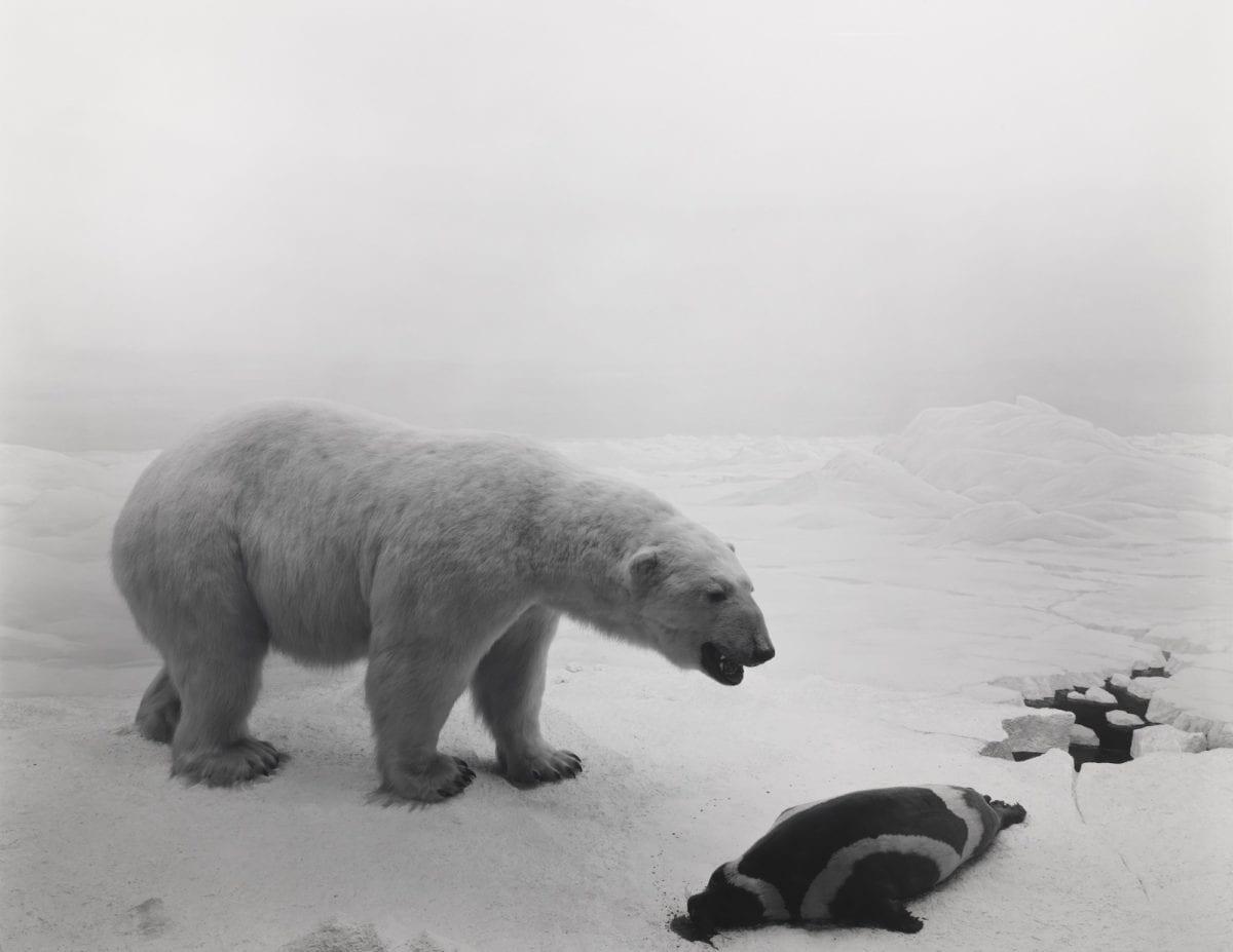 105_Polar Bear, 1976