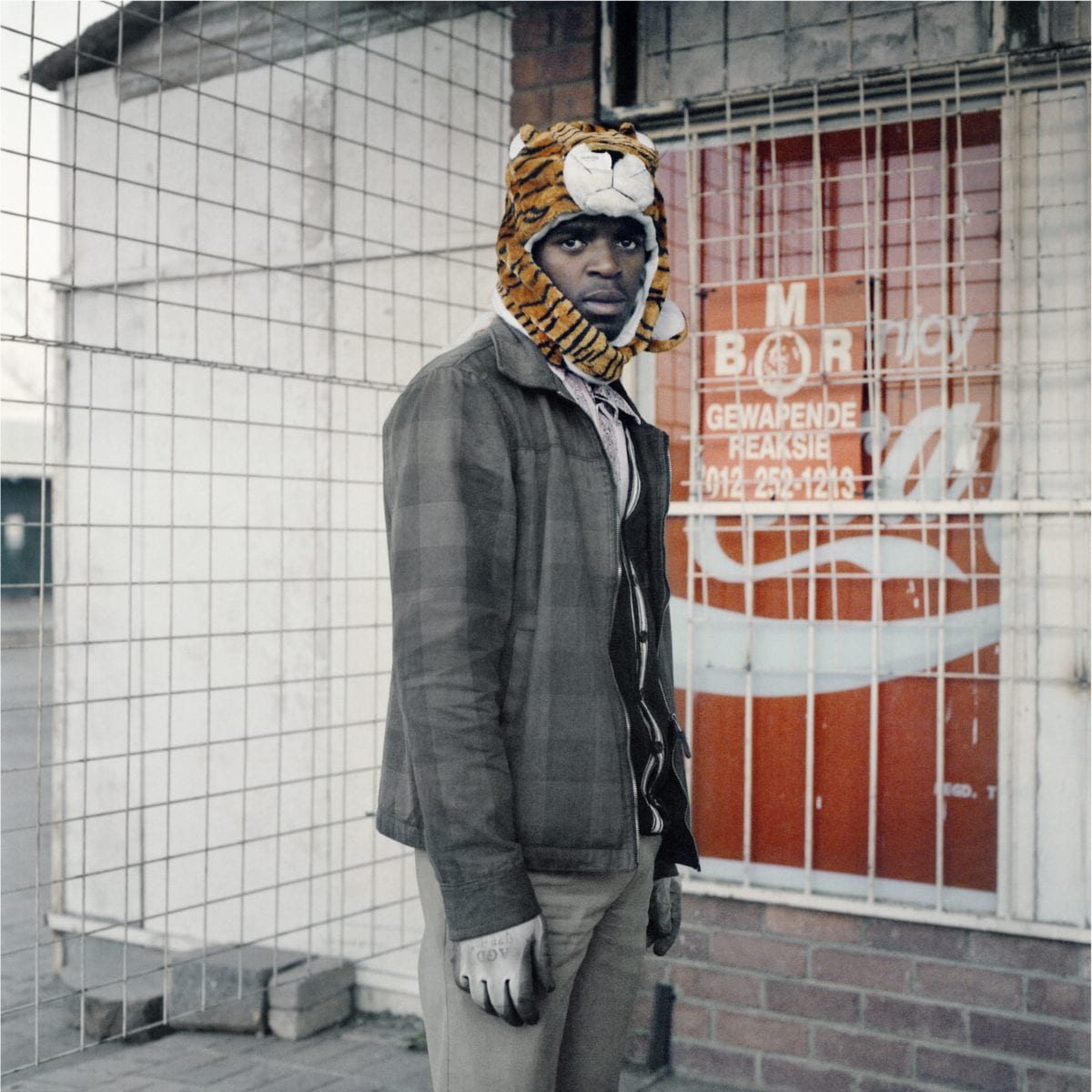 Second Transition, Tiger, 2012