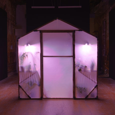 Conrad Ventur, pavilion, 2020. Greenhouse, plants Photo: Mark Waldhauser