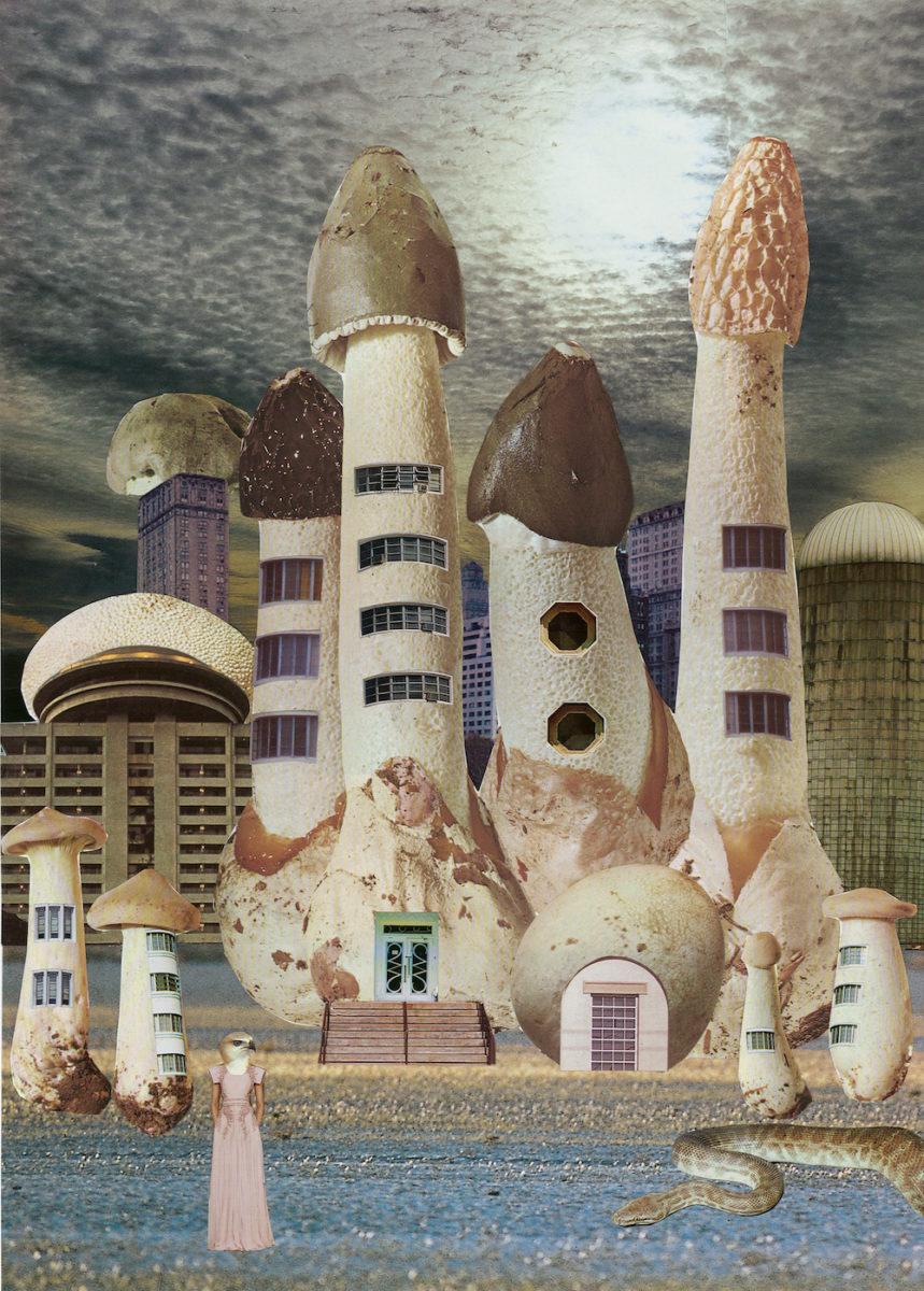 mushroom city (c) Seana Gavin