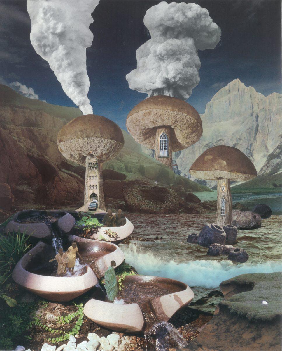 untitled mushroom (c) Seana Gavin
