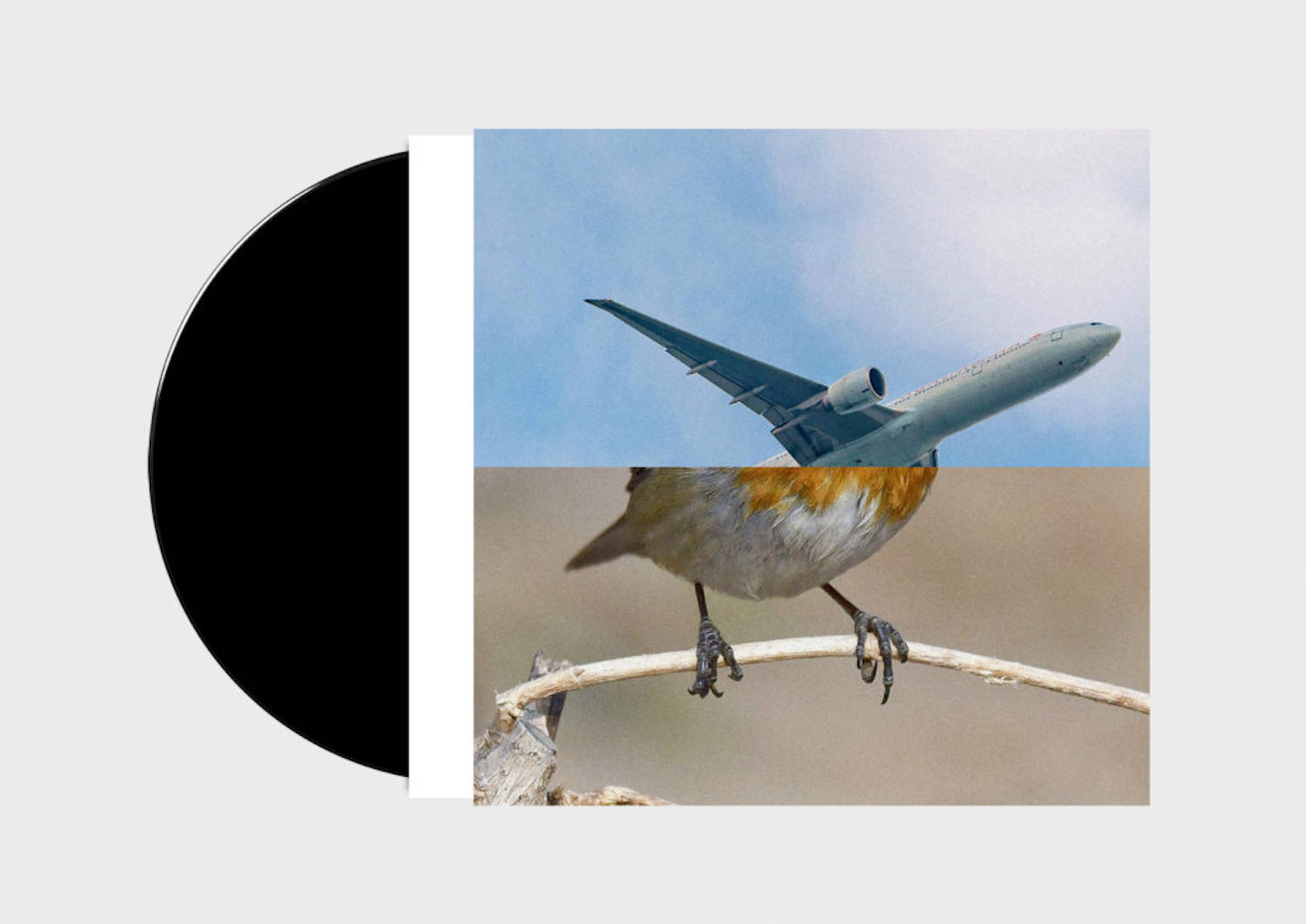Anthony Burrill, Erik Kessels and Malcolm Goldie, Birds