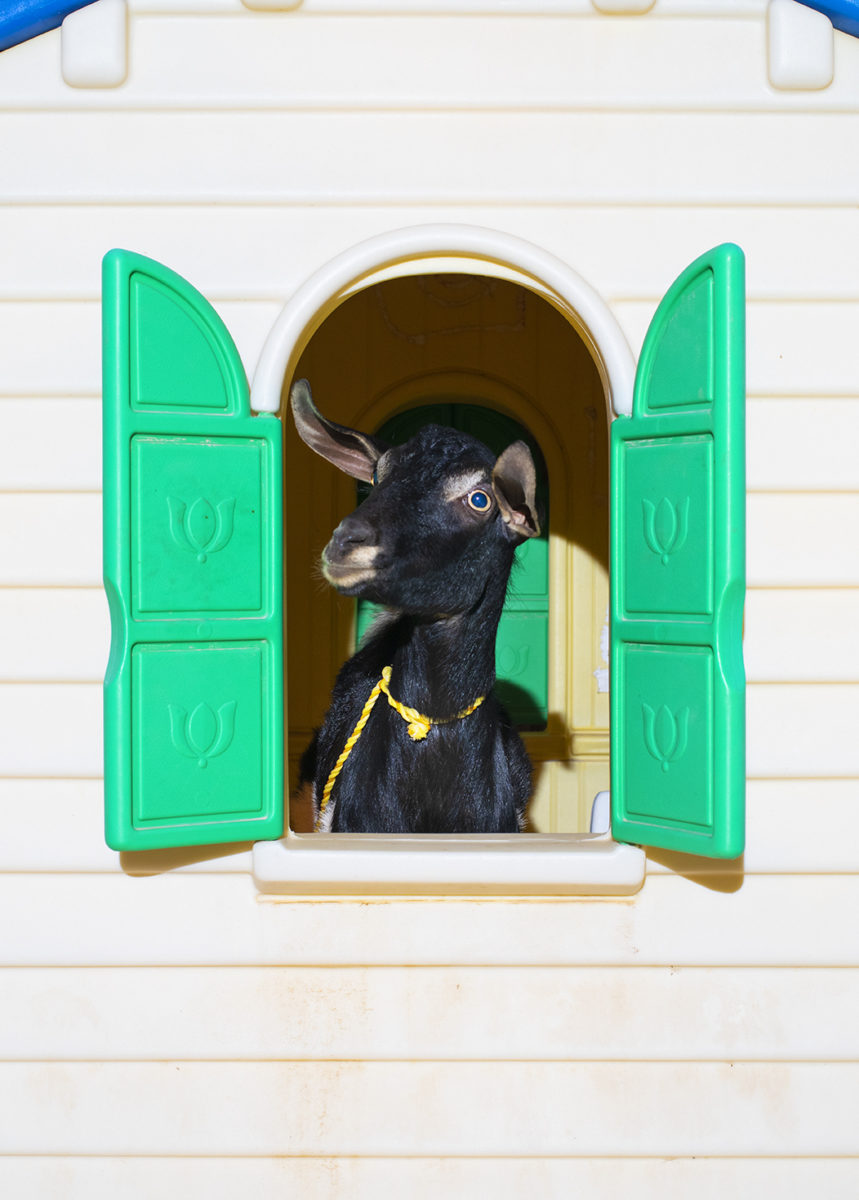 Farah Al Qasimi, Playhouse Goat, 2020. Courtesy of the Artist and Helena Anrather, New York