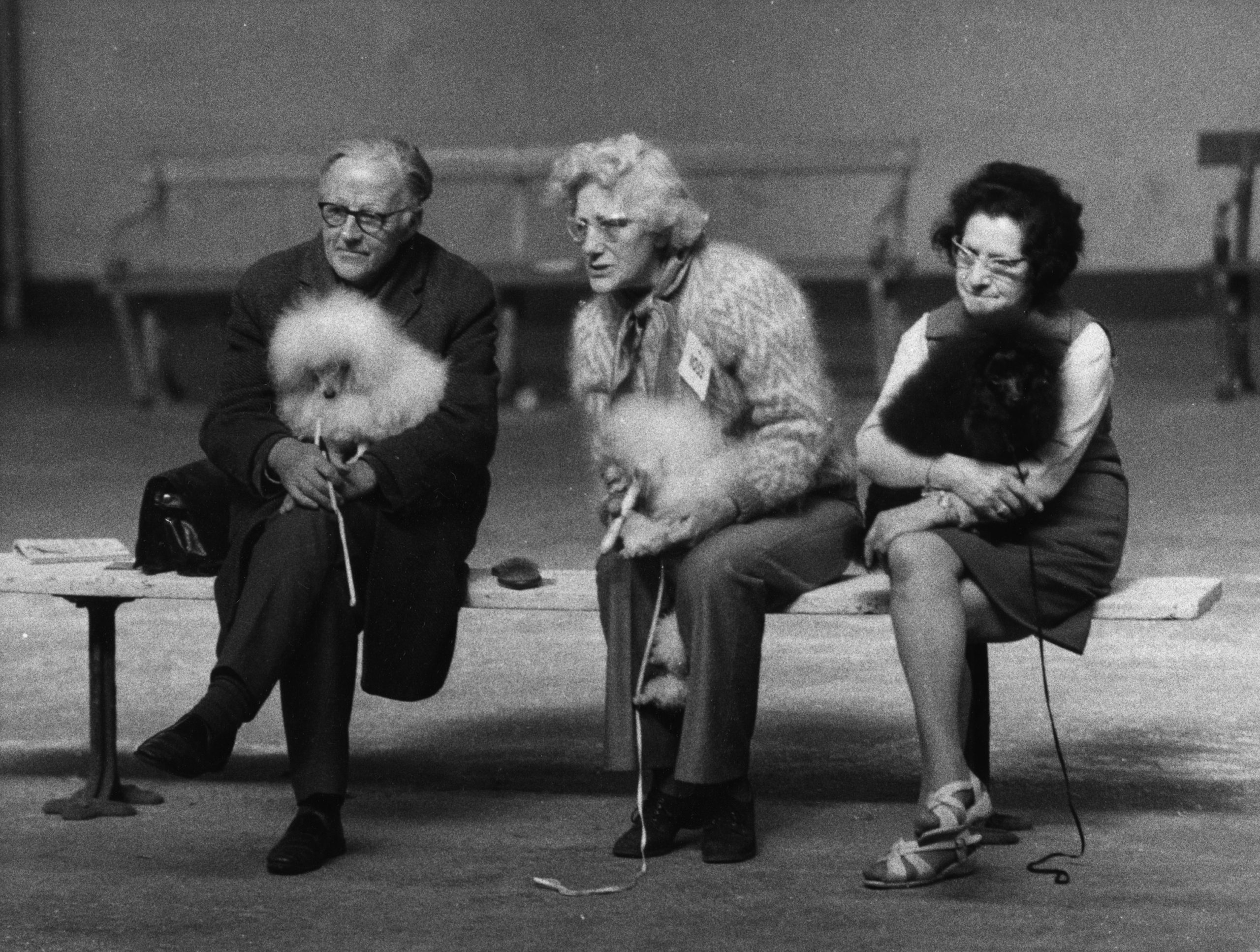 Shirley Baker, Manchester Dog Show, c.1965