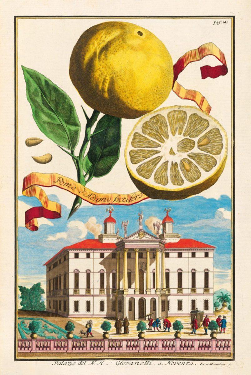 279_volkamer_citrus_fruits_xl_01114_2011011320_id_1329659