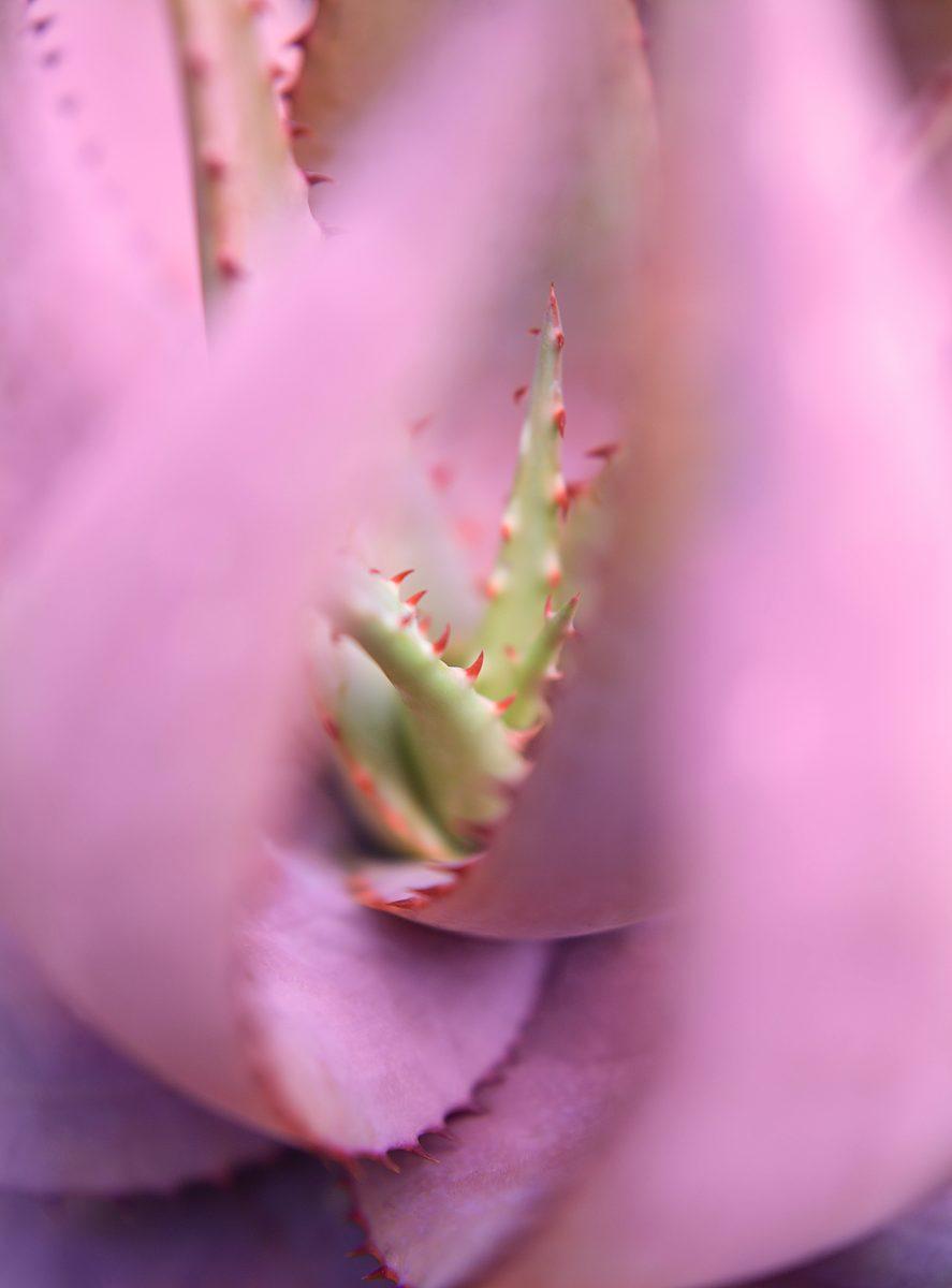 Succulents 6, 2018. © 2021 Mona Kuhn