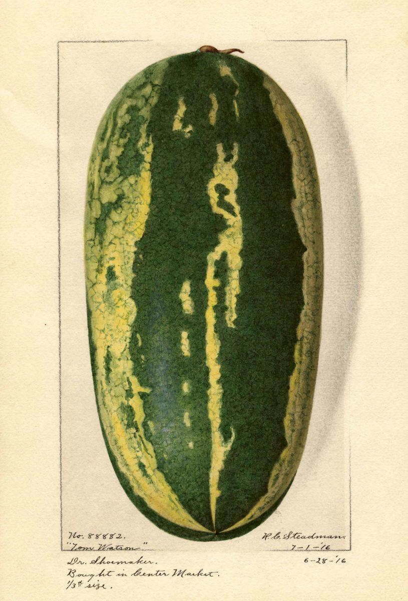 Watermelon, Tom Watson  R. C. Steadman, 1916