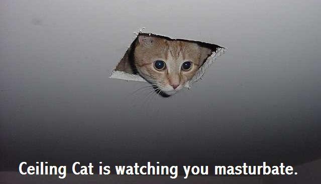 The original Ceiling Cat meme