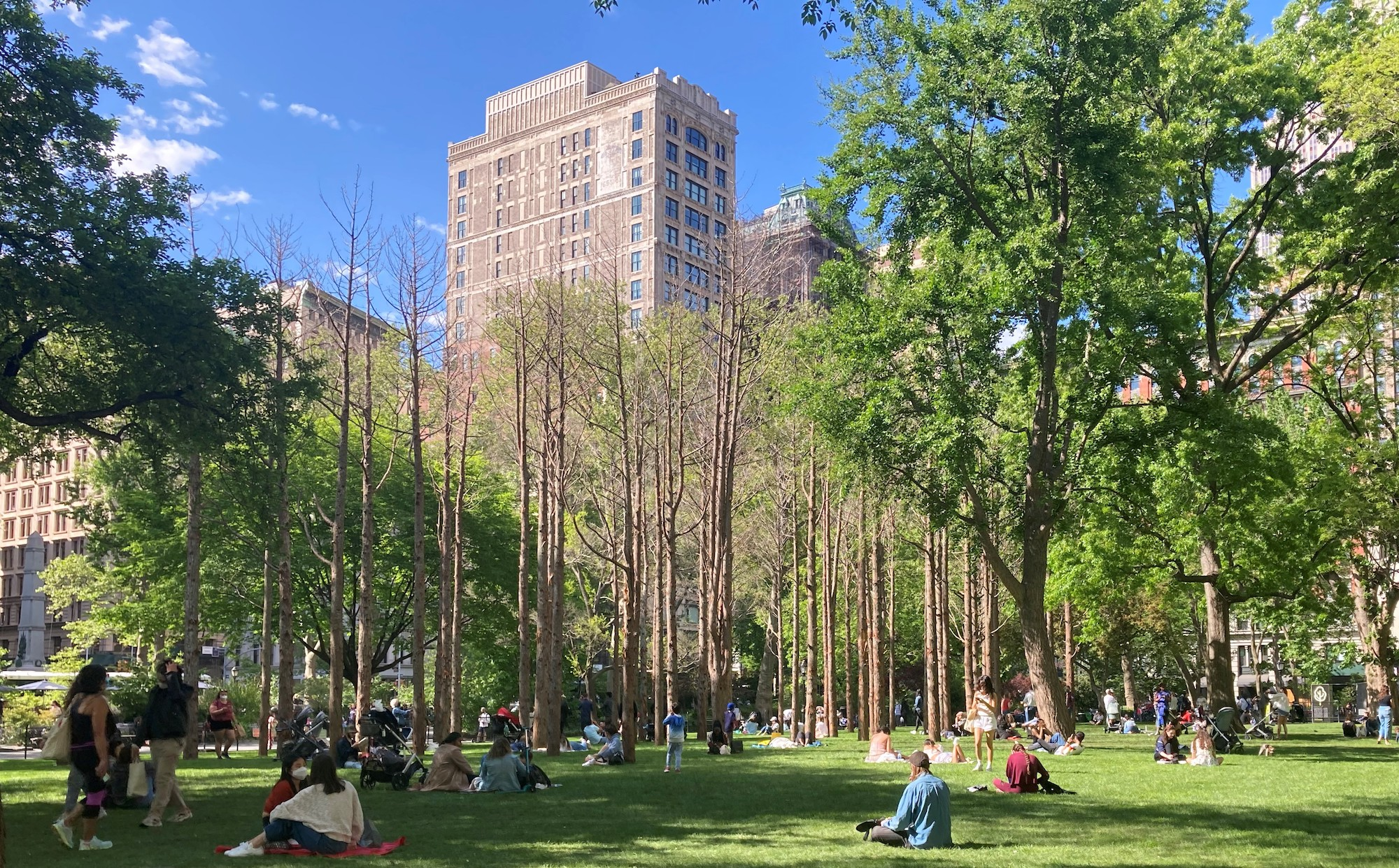 Maya Lin, Ghost Forest, 2021. Courtesy the artist and Madison Square Park Conservancy